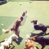 Cuidados com cães em hotel no Ipiranga