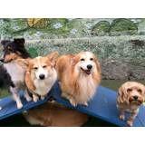 Cuidados com cão em Cotia