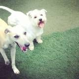 Day Care para Cães