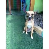 Daycare canino em Jandira