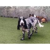 Daycare de cachorro no Jardim Europa