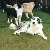 Daycare de cachorros na Água Branca
