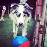 Daycare de cães na Pedreira