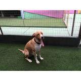 Daycare de cão  no Jardim Paulista