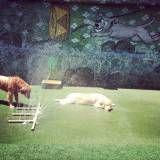 Daycare dog