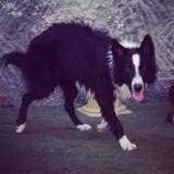 Daycare para cachorro no Morumbi