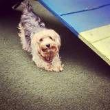 Daycare para cachorros na Saúde
