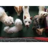 Daycare para cães em Alphaville