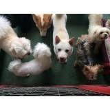 Daycare para cães no Aeroporto