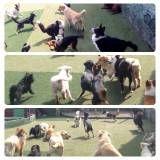 Diversão de hotel para dog na Lapa