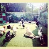 Diversão de hotel para dogs no Jardim Paulista