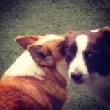 Diversão em hotéis para cachorro em Interlagos
