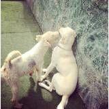 Diversão em hotéis para cachorros na Água Branca