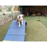 Diversão em hotel para dog em Sumaré