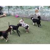 Diversão em hotel para dogs no Alto da Lapa
