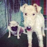 Diversão garantida em hotel de cães no Jaguaré