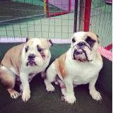 Diversão garantida em hotel para cães em Raposo Tavares