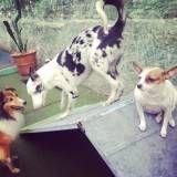 Diversão garantida em hotel para cão no Itaim Bibi