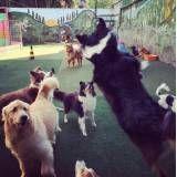 Diversão hotel de cachorros no Aeroporto