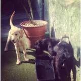 Dog hotéis na Vila Mariana