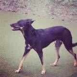 Dog no Campo Limpo