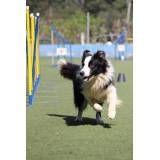 Dog World competição canina no Aeroporto