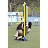 Dog World competição em Pinheiros