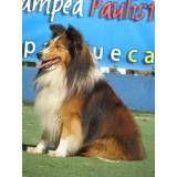 Dog World hotel para cachorros em Santo Amaro