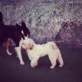 Dogs na Vila Mariana
