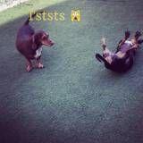Empresa de adestrador para cachorros em Interlagos