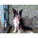 Empresa de adestrador para cachorros em Moema