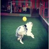 Empresa de adestrador para cachorros na Vila Leopoldina