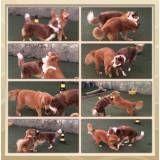 Empresa de adestrador para cães em Taboão da Serra