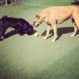 Empresa de adestrador para cães no Alto da Lapa