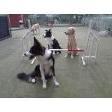 Empresa de adestrador para cães no Jardim América