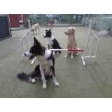 Empresa de adestrador para cães no Jardim Bonfiglioli