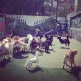 Empresa de adestrador para cão em Itapecerica da Serra