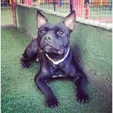 Empresa de adestradores de cachorro em Interlagos