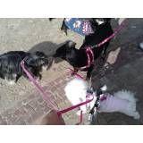 Empresa de adestradores de cachorro na Cidade Ademar