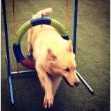 Empresa de adestradores para cães no Itaim Bibi