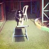 Empresa de adestramento de cachorro no Jardim América