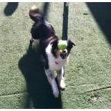 Empresa de adestramento de cães na Vila Andrade