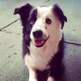 Empresa de adestramento de cão no Alto da Lapa