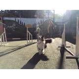 Empresa de adestramento para cachorros na Pedreira