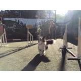 Empresa de adestramento para cachorros no Rio Pequeno