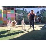 Empresa de adestramento para cão em Sumaré
