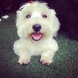 Empresa de Daycare canino na Pedreira