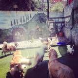 Empresa de Daycare de cães no Jardim América