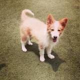 Empresa de Daycare de cão  no Campo Limpo