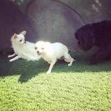 Empresa de Daycare para cachorros no Jardim Bonfiglioli